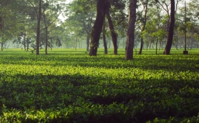 Dibrugarh : River songs from the land of tea.