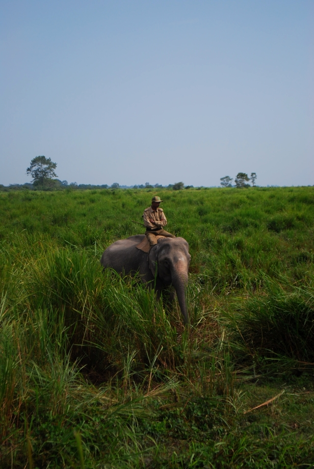 kaziranga national park forest guard