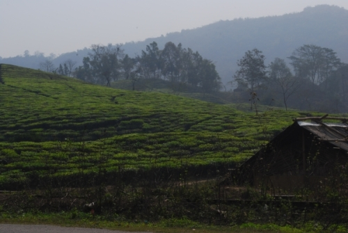 upper assam margherita tea garden estate stillwell road
