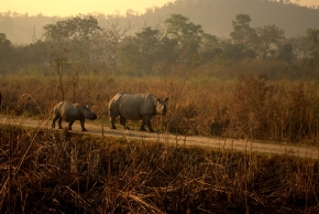 Photo Of The Day ~ Rhino Land