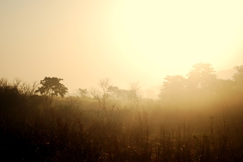kaziranga national park assam landscape morning