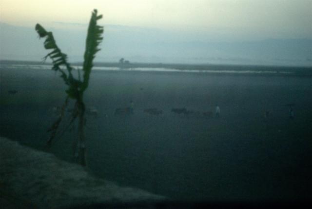 majuli island evening assam mist