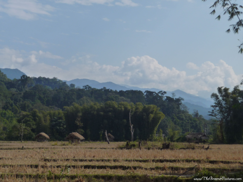 Rice feilds at Namdapha National Park of the Lisu Tribe