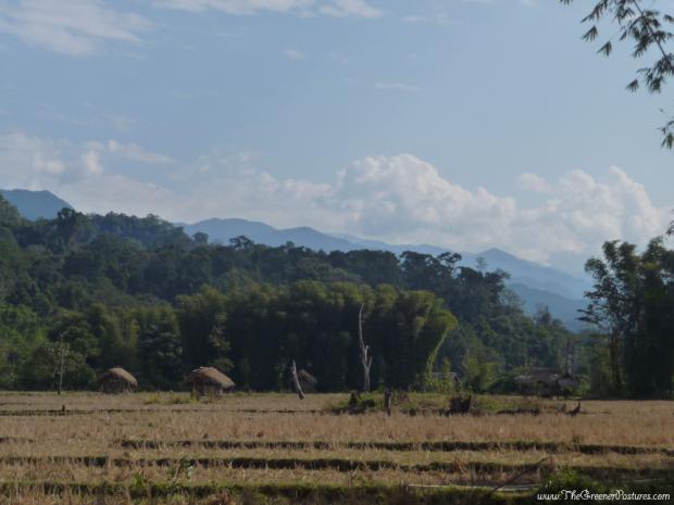 Rice feilds at Namdapha National Park of the Lisu Tribe