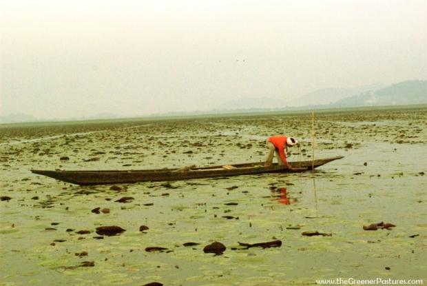 Dipor Bil Lake, Assam