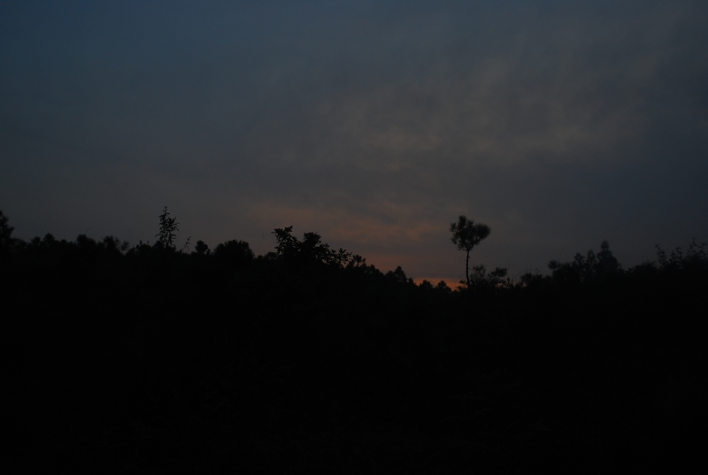 Evening silhouette.