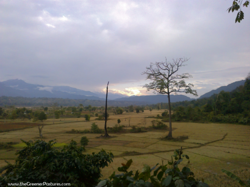 Eastern Himalayas at Namdapha National Park, Arunachal Pradesh 1