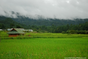 Photo Of The Day ~ Rice Fields Of Ziro in Arunachal Pradesh