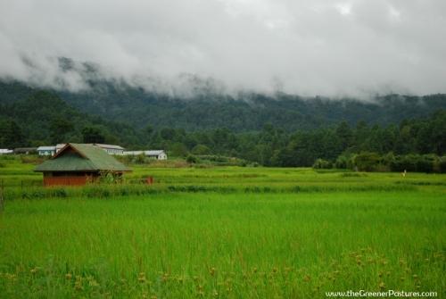 Ziro Valley - Green Rice Fields - Arunachal Pradesh