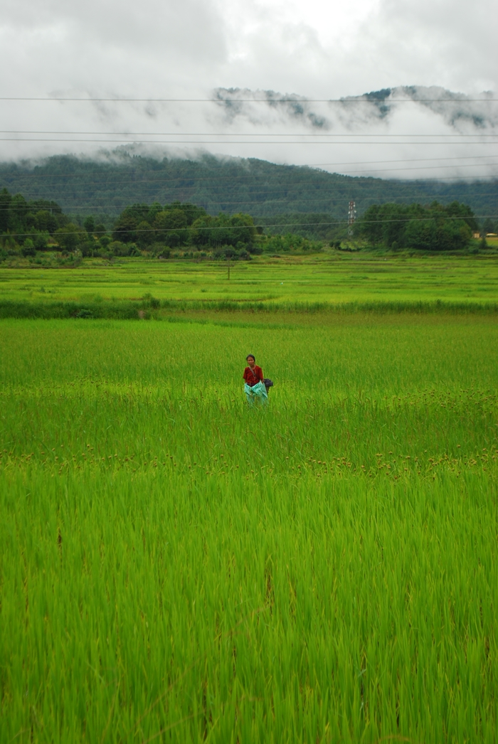 An Apatani lady works in the fields
