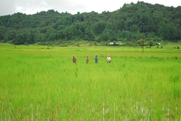 Central Arunachal Pradesh Ziro Apatani Tribe21