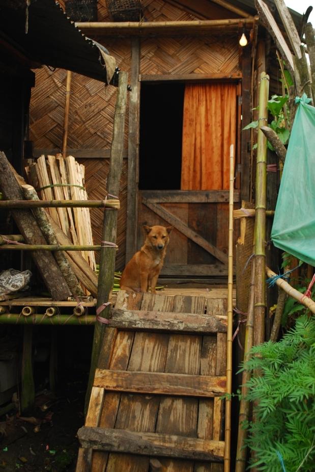 Central Arunachal Pradesh Ziro Apatani Tribe25