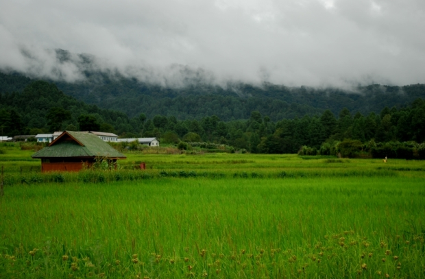 Rice-paddy cum fish farms of the Ziro Valley.
