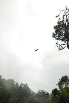 An eagle soars high