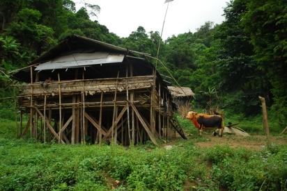 arunachal pradesh - ziro - apatani - daporijo - subansiri valley - tagin tribe19