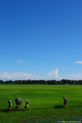 Photo Of The Day – A Sunny Day After MonsoonRain