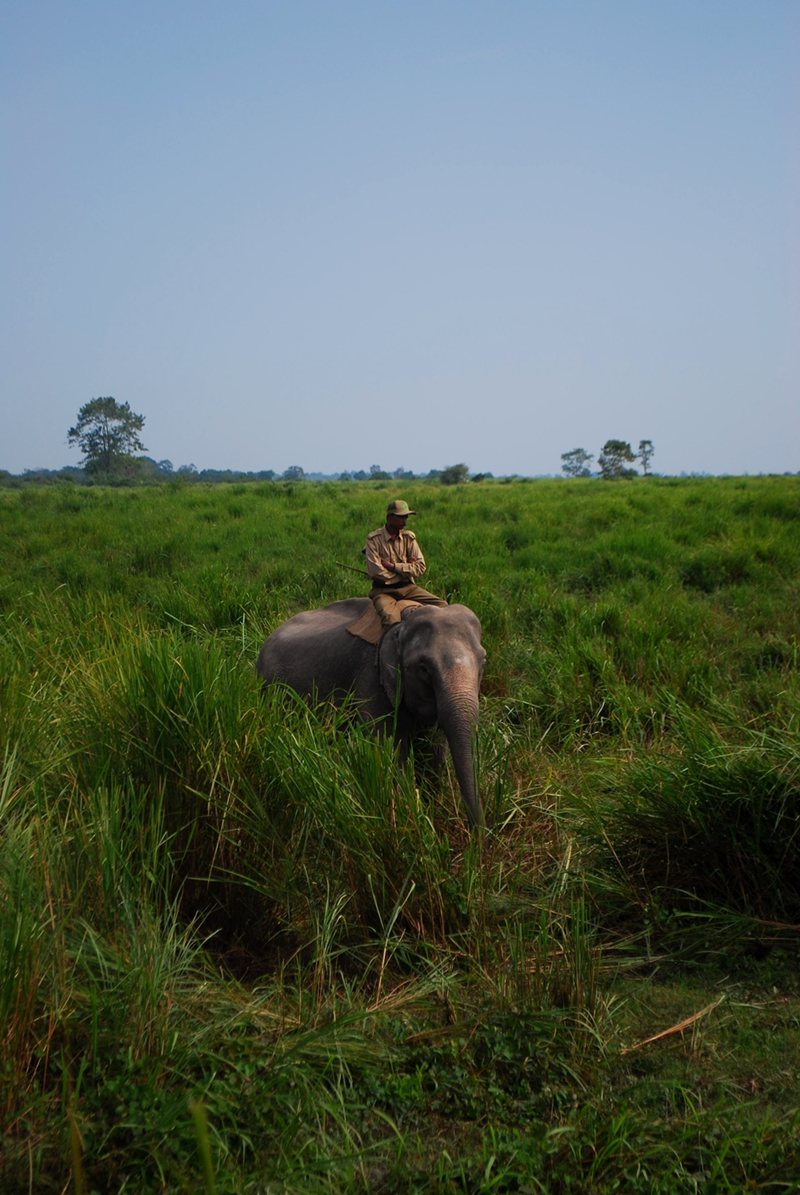A mahout ranger with his elephant midst lush green grassland.