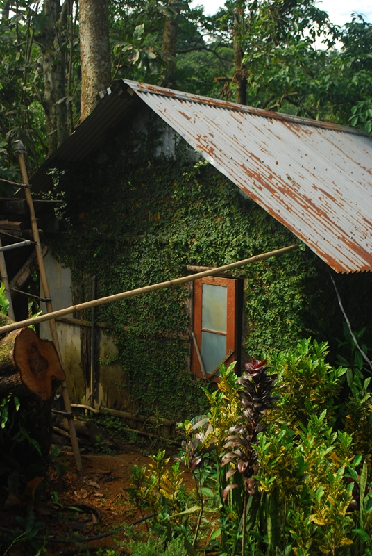 Creeper covered houses are common in Mawlynnong.