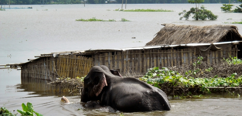 The floods also cause heavy losses in wildlife/biodiversity.