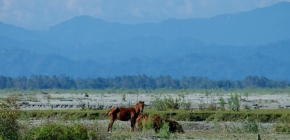 3 Of The Best Hidden National Parks Of North-East India | WildlifeTravel