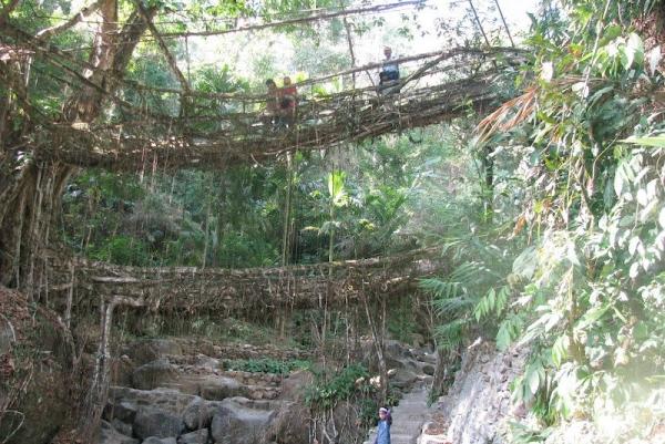 Double-Decker-Living-Root- Bridge-Meghalaya-Cherrapunji-Nongriat