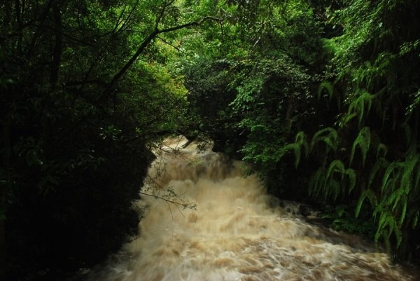 Numerous streams come alive with tormenting rage. (summer monsoon)