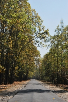 Decidious woodlands, Nameri National Park, Assam