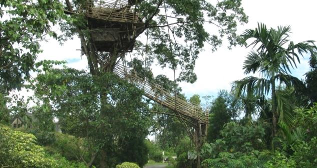 Tree House, Mawlynnong, Meghalaya