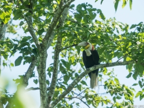Photo Of The Day – WhreatedHornbill