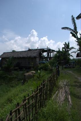 House of Jadav Payeng, Assam.