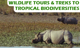 Northeast India Wildlife Tours