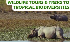 Northeast India Wildlife Tours
