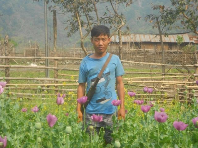 Opium Fields, Tezu, Arunachal Pradesh, Mishmi Tribe 1
