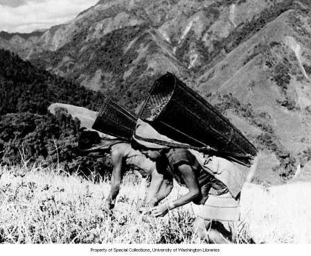 Shimong Adi man and woman harvesting millet and Job's tears, Siang Frontier Division, Arunachal Pradesh. Year: 1954 University of Washington Libraries