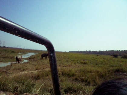 Wild Elephants, Pobitora Wildlife Sanctuary