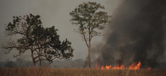 Forest fire, Kaziranga