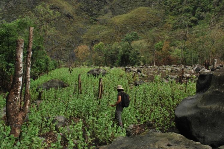 Trekking through Opium Farms in Lohit Valley, Arunachal Pradesh
