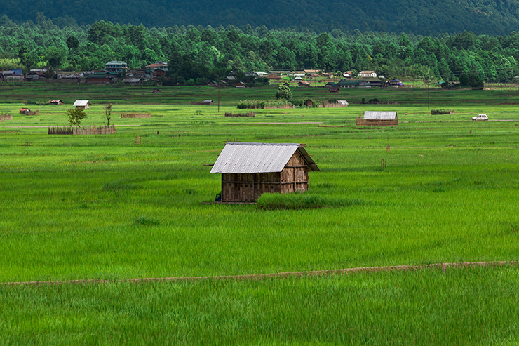 Apatani Rice and Fish Farms, Ziro Valley, Arunachal Pradesh