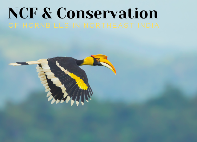 NCF and conservation of hornbills